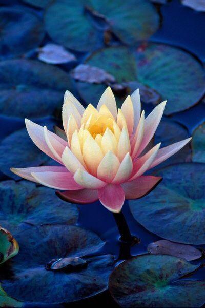 Meditations 9.
